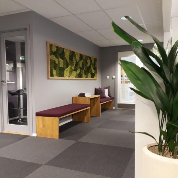Mose vegg på kontoret til Clemens Eiendom i Oslo