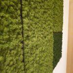 Mose bilde i grønt