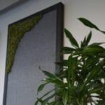 Oppslagstavle i filt kombinert med mose