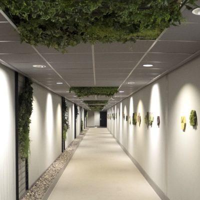Frodig korridor med mose og kork fliser på veggene
