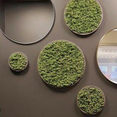 Grønne mose sirkler på veggen