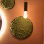 Lekker grønn mose sirkel på baderom