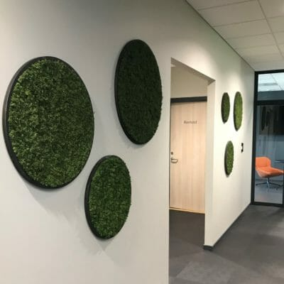 Grønne mosesirkler i norsk design
